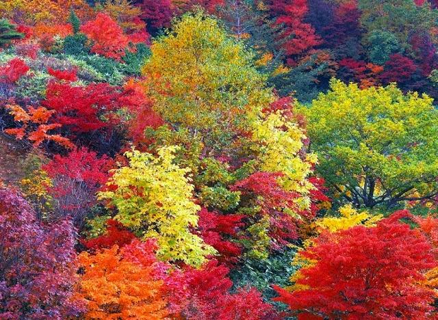 colores_arbol_de_hoja_caduca_en_oto_o_5