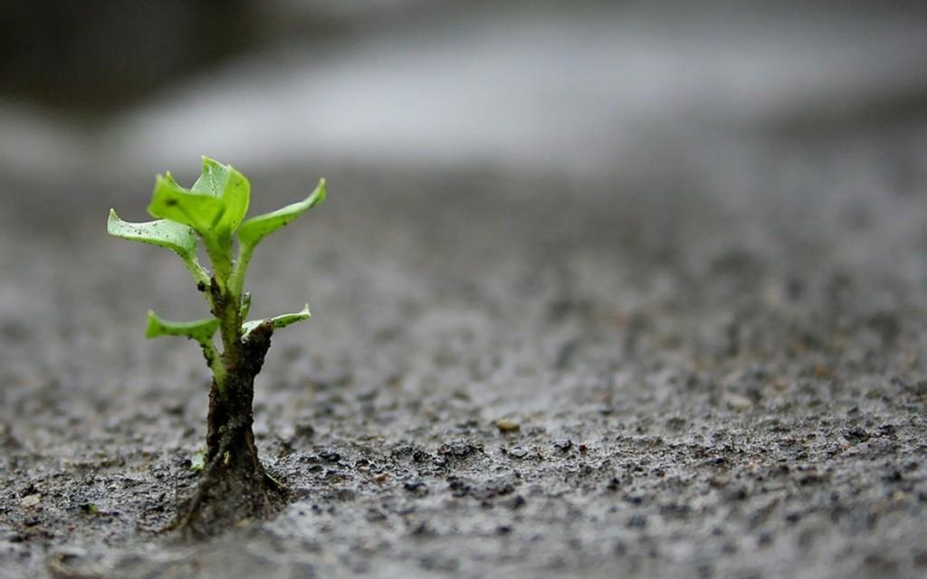 semilla-germinando-1-1170x731